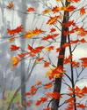 Уже осень. Значит скоро весна